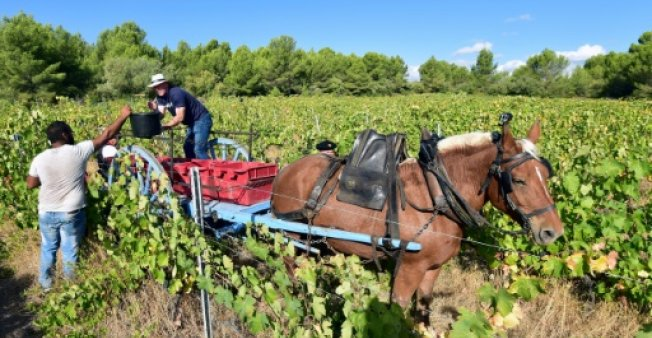 french wine market to shrink further but organics surge report