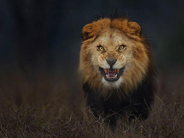 lahore zoo sets sights on night safari