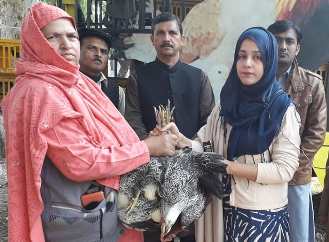 2.5 million units to be distributed in Rawalpindi; Rs1,200 unit comprises four chickens and a cockerel. PHOTO: EXPRESS