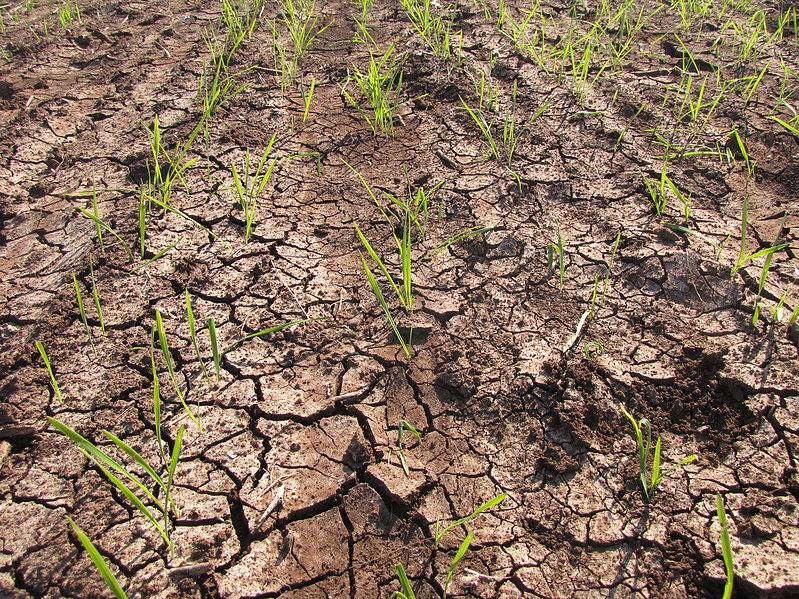 water scarcity hits tail end farming community