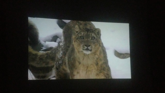 pakistan s rare snow leopards showcased in latest documentary