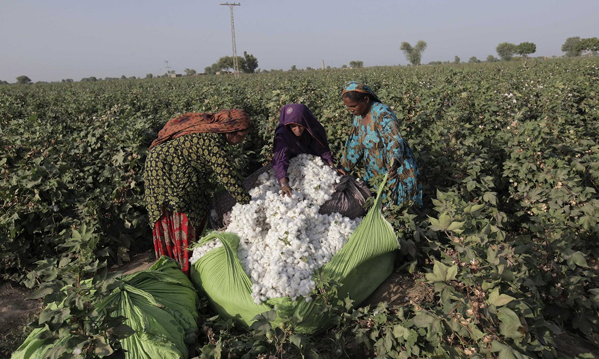 women workforce calls for the implementation of labour laws