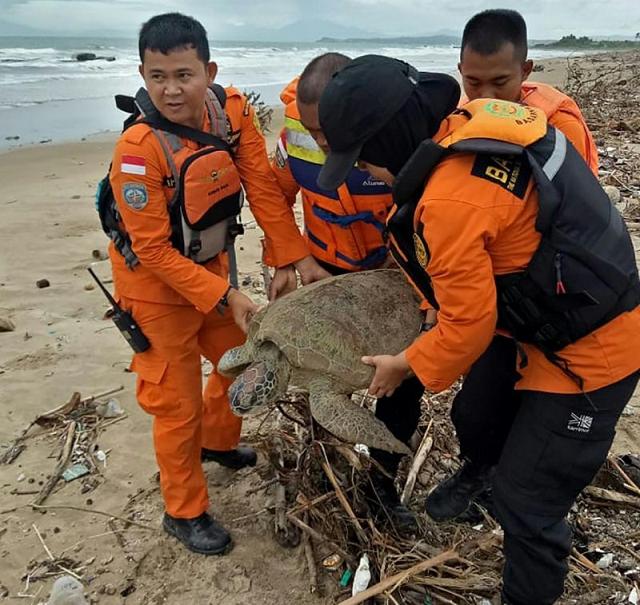 all lives matter indonesia saves tsunami stranded turtles
