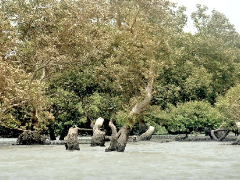 The depletion of mangrove forests along Sindh's coastline has not only impacted the lives of coastal communities but also means that there are no natural barriers to protect urban centres from tsunamis and storms. PHOTO: ATHAR KHAN/EXPRESS