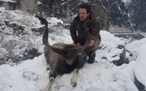 another american hunts markhor in g b pays 105 000 for permit