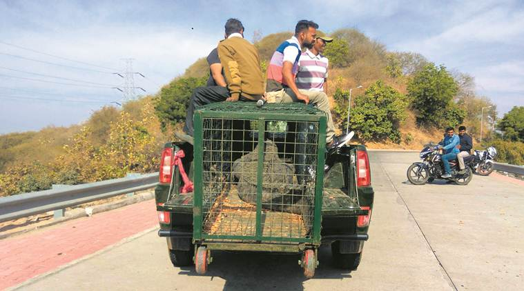 crocodiles being relocated to make way for seaplane service to india s statue of unity