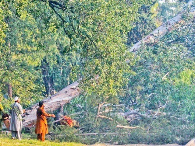 5 000 trees to be cut to make way for leh expressway