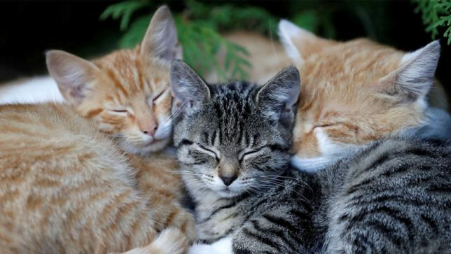 Sleeping cats. PHOTO: REUTERS/FILE