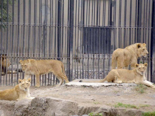 lahore zoo invites citizens to adopt a friend