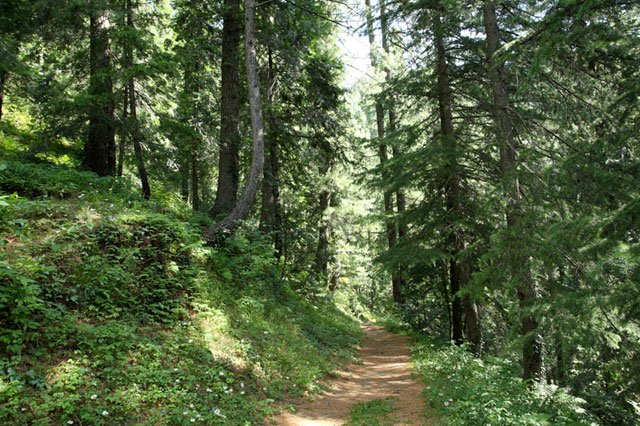 k p to give locals greater rights in kumrat natural park