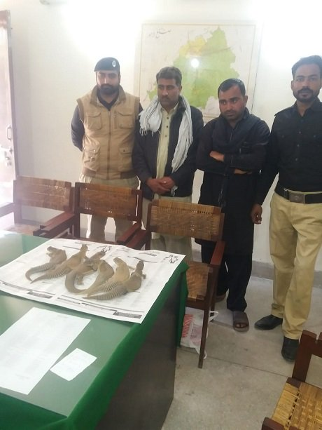six lizards were recovered from the possession of sajjad ali and ghulam sabir photo express