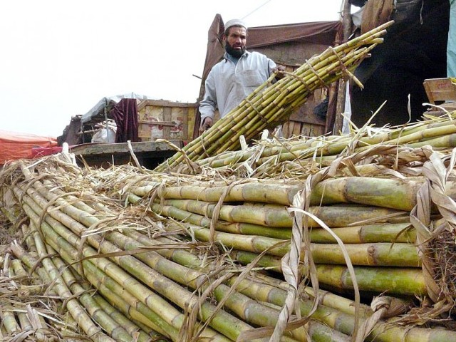 pakistan lagging behind in sugarcane productivity