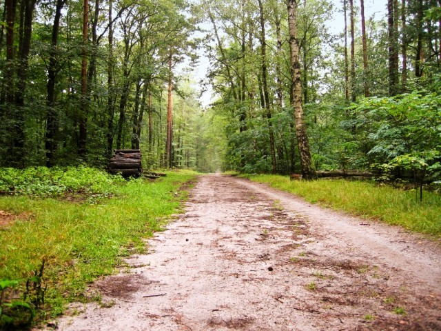 the government has already put a ban on the lease of forest land photo file