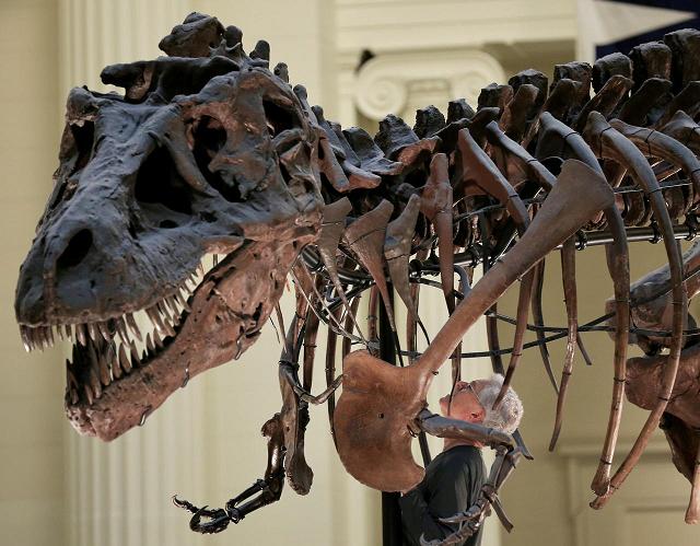 tyrannosaurus rex found in canada is world s biggest