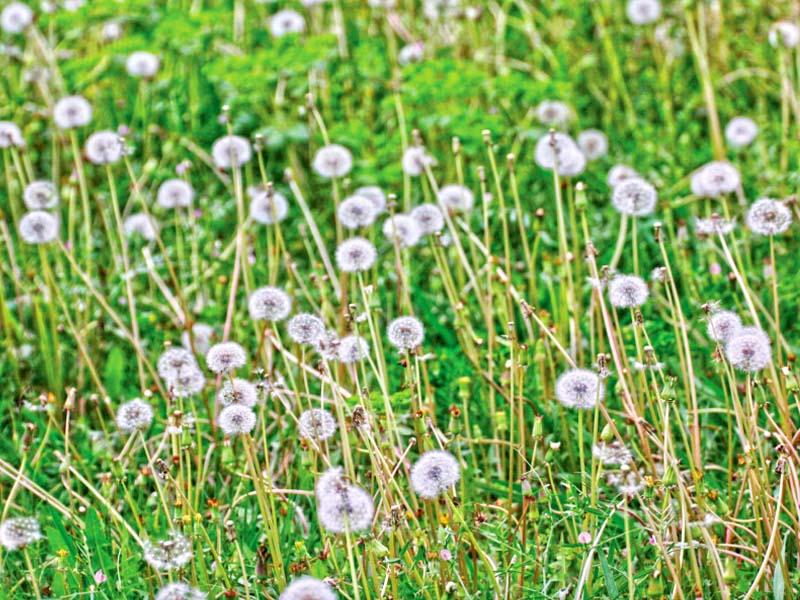 view of pollen flowers at garnen avenue photo online