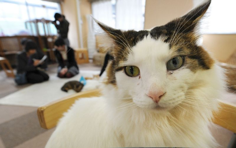 both household and cafe cats showed a similar ability in differentiating their own names from general words photo afp