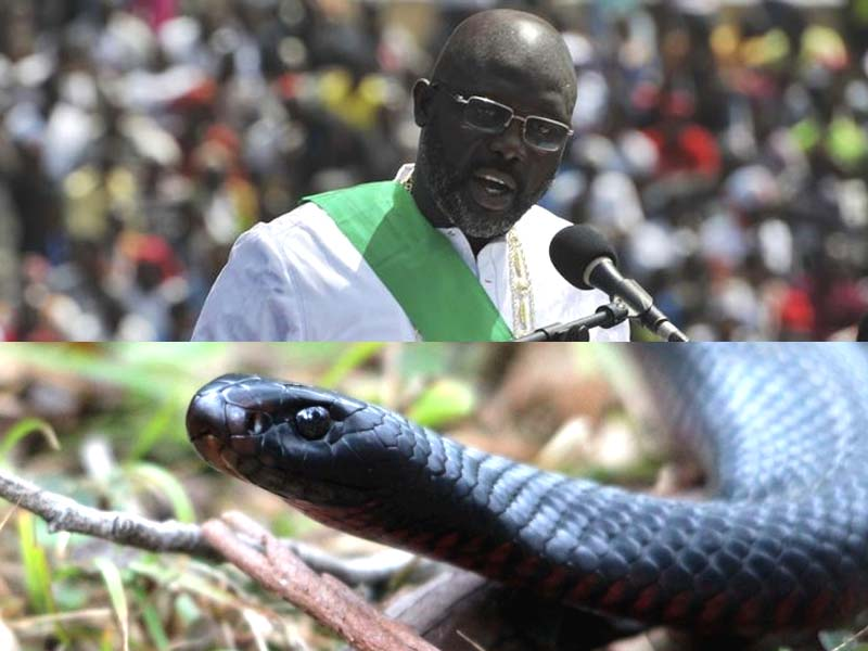 snakes force liberian president to work from home