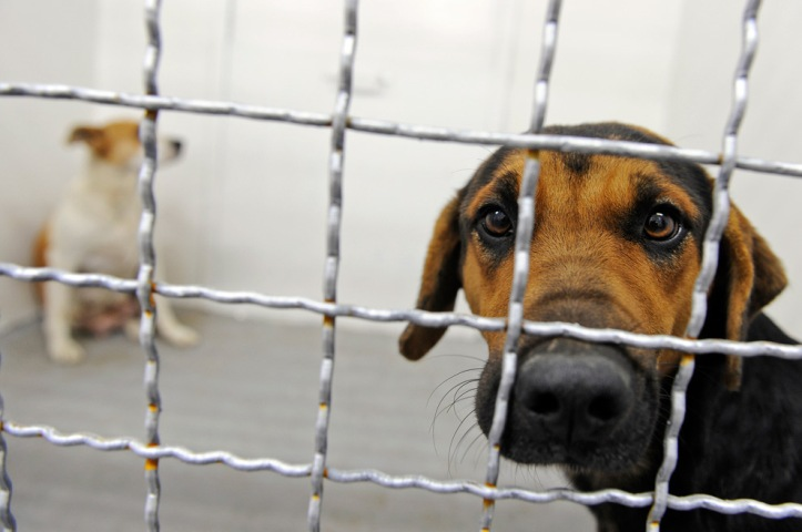 animal activists slam double standards as shanghai dog show opens