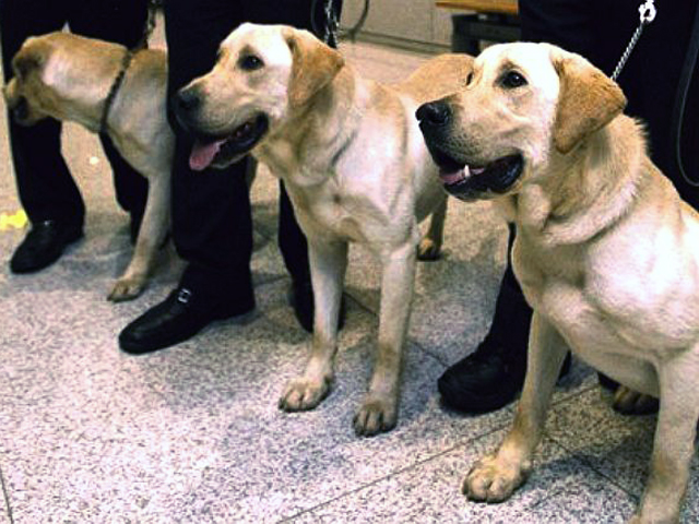 amid animal cruelty debate 80 of south korea s sniffer dogs are cloned
