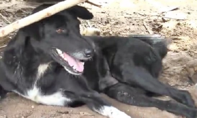 disabled dog rescues baby buried alive by teenage mother in thailand