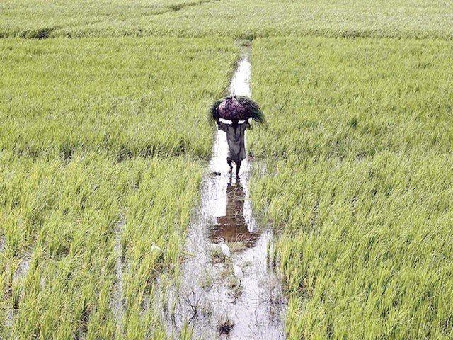 agro based skills vital for development minister