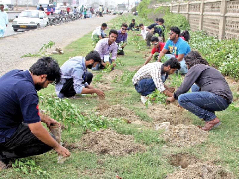 govt to provide tree plantation data to supreme court