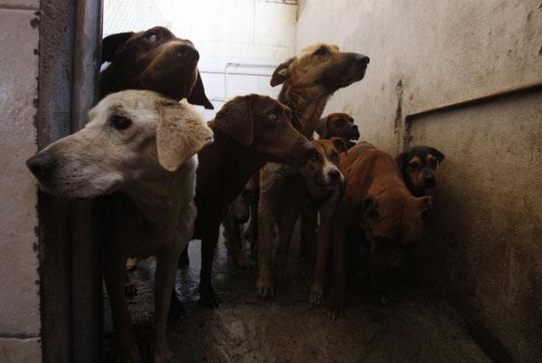 wild animals stray dogs an untamed threat in k p