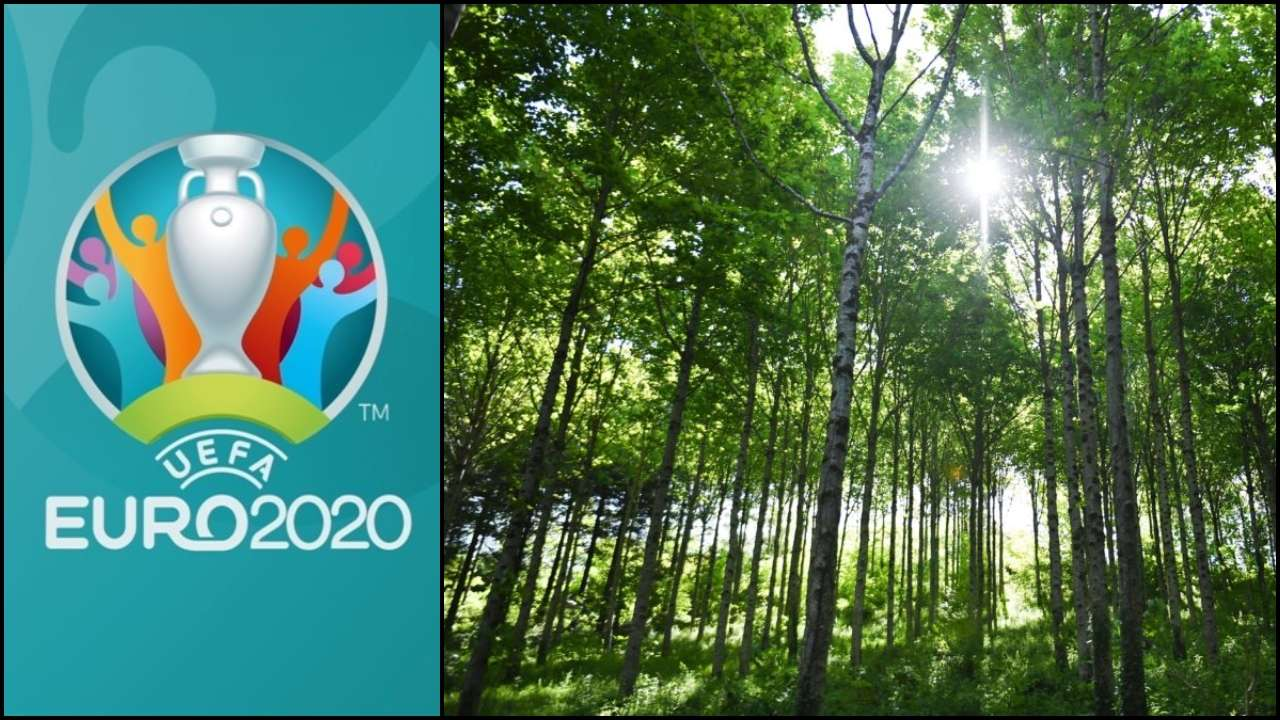 uefa to plant 600 000 trees to offset carbon emissions from euro 2020