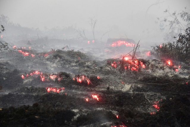 burning issue indonesia fires put palm oil under scrutiny