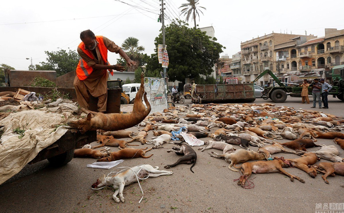 rabies epidemic real issue or excuse for dog culling