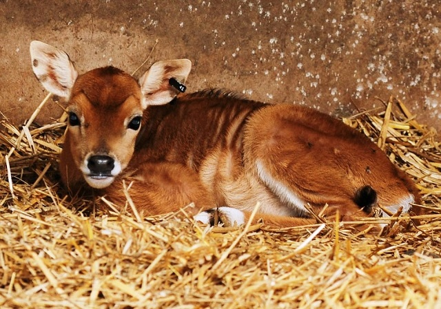 lahore zoo welcomes new additions