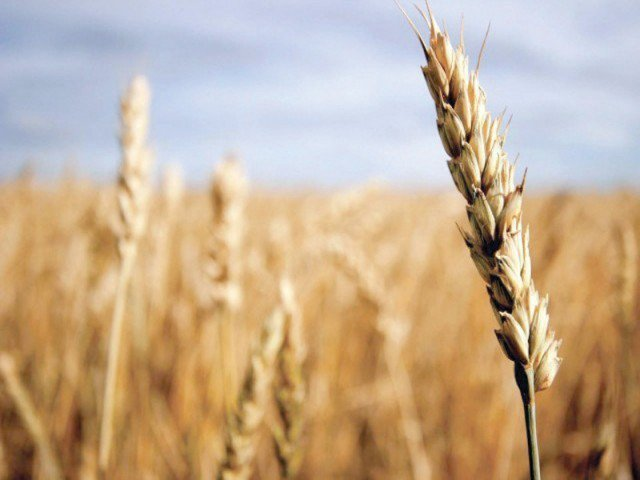 k pfc wheat procurement target set at 0 15m tonnes