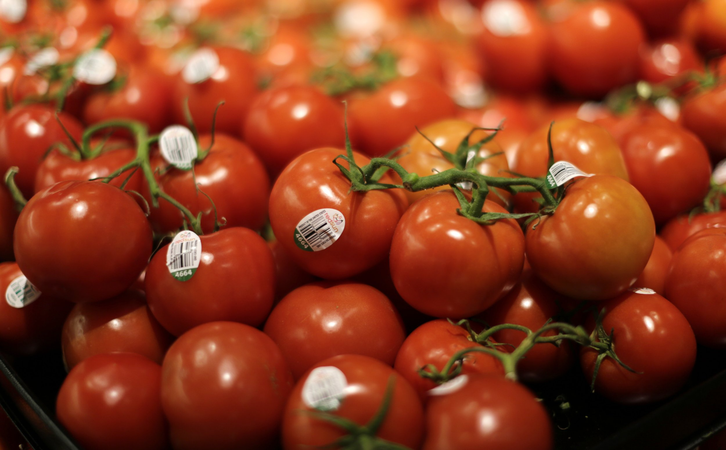 pti govt allows tomatoes import from iran to arrest price hike