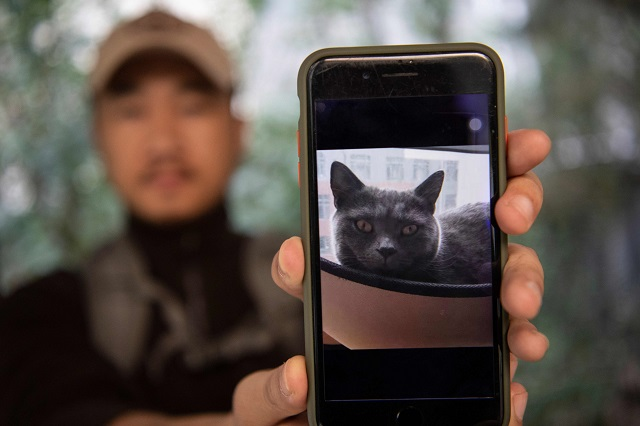 the purrfect crime chinese pet detective seeks lost animals