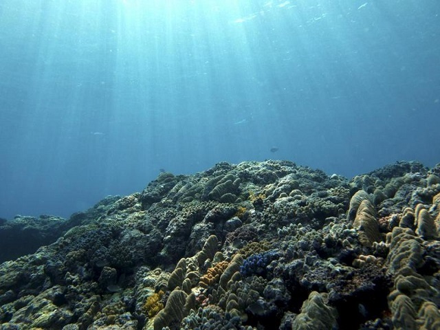 ocean could provide over six times more food than it does today