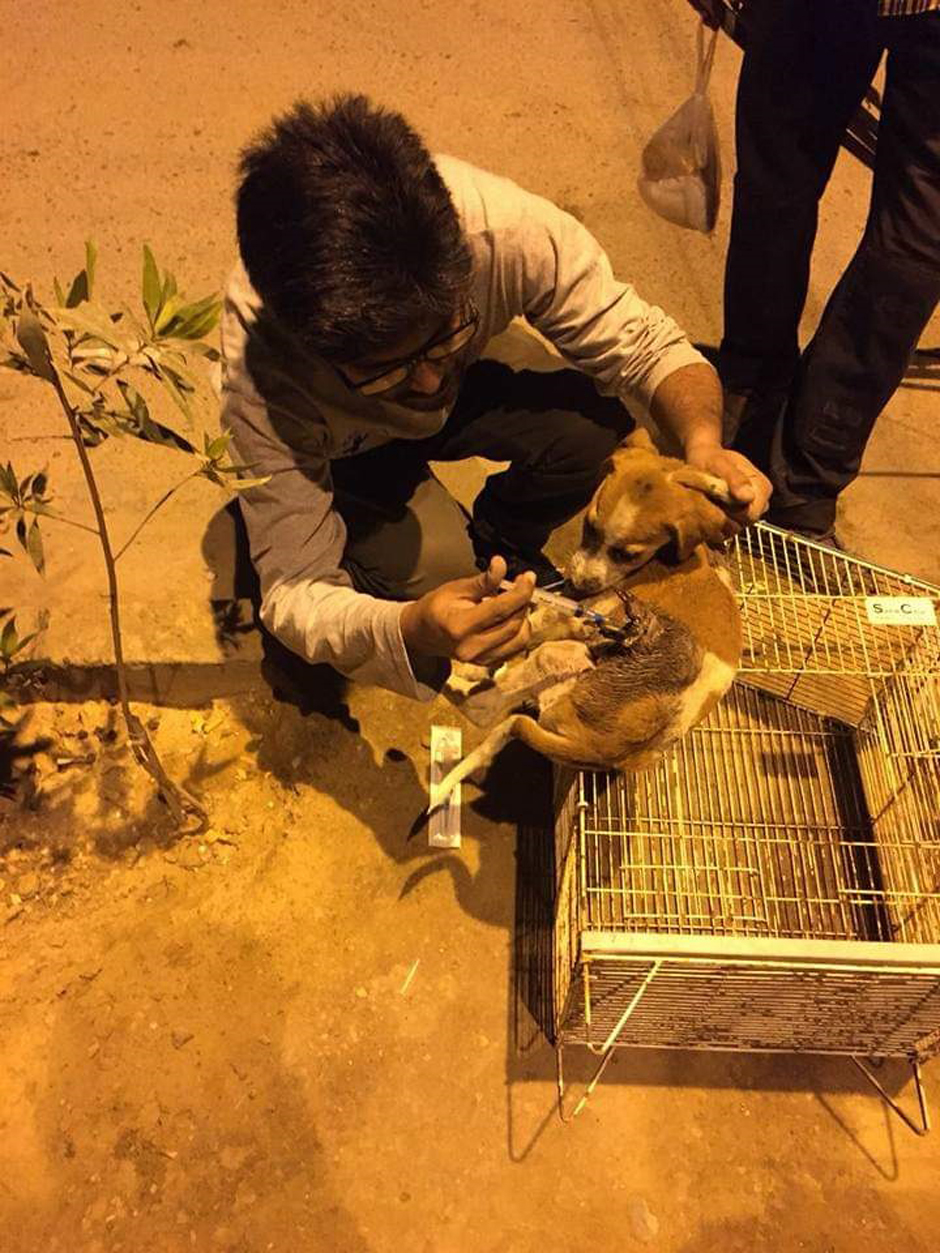 sos pakistan to launch app to rescue stray animals in danger