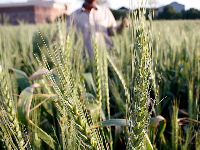 strict measures govt suspends wheat quota of several mills for misappropriation