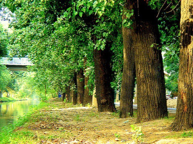 the year pakistan started its fight to be greener