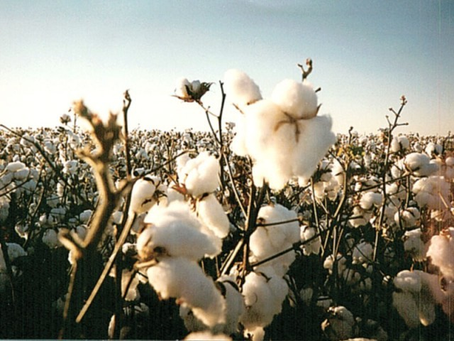 cotton crisis investment in r d needed