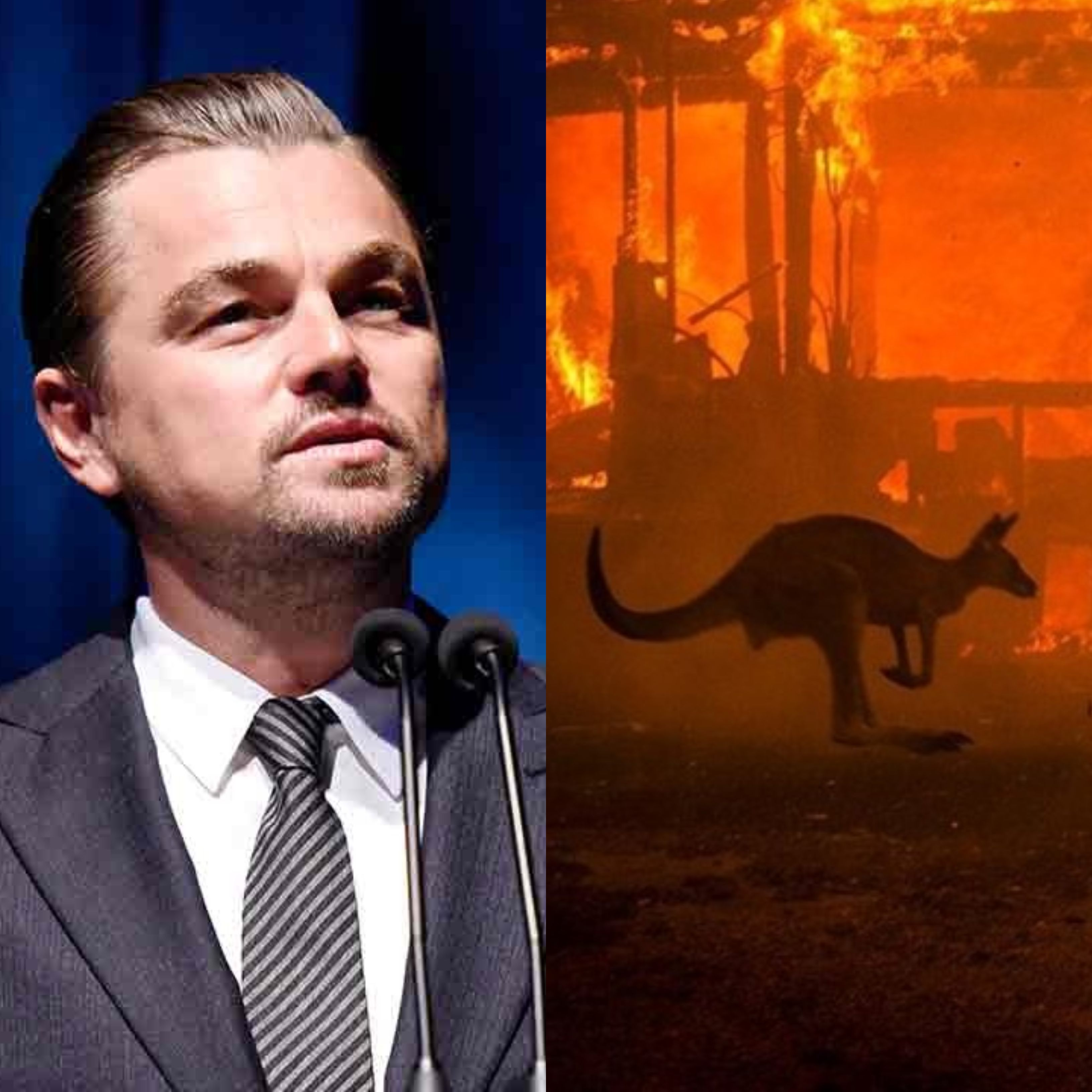 australiafires celebrities express concern over raging climate change crisis
