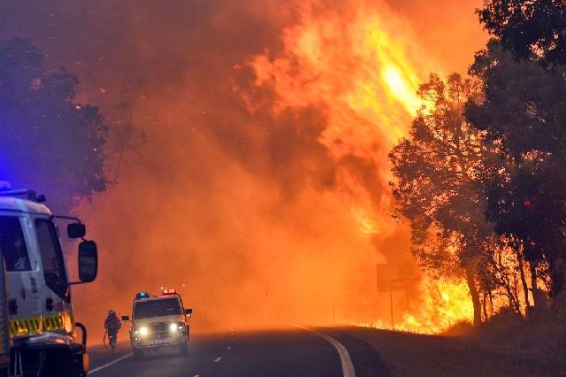 for sale manager of australian bushfires app