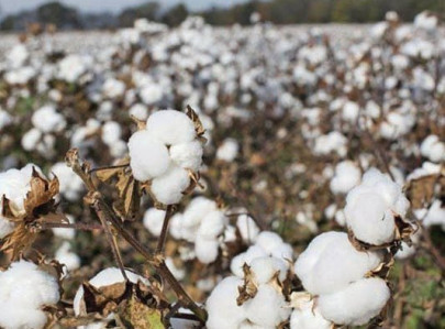foreign ministry left out of loop on cotton import from india