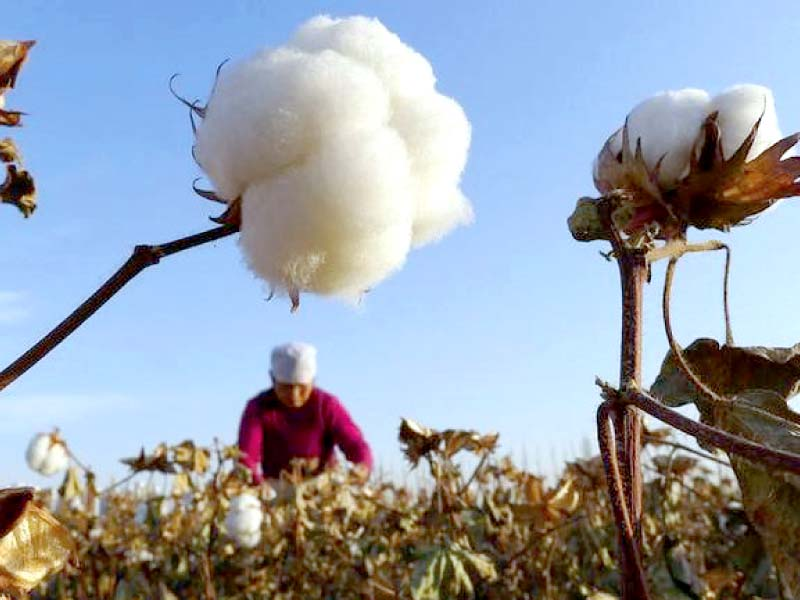 due to shortage of cotton and yarn the users were compelled to import the commodities from the united states brazil and uzbekistan photo file