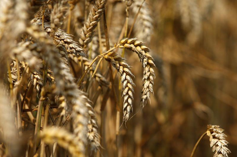 pti govt recommended to increase wheat support price