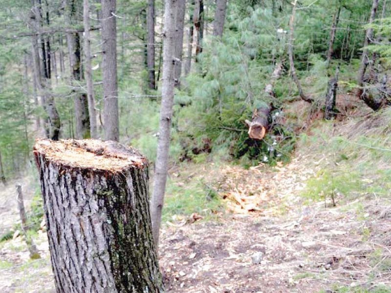 soan sakesar valley under threat of deforestation