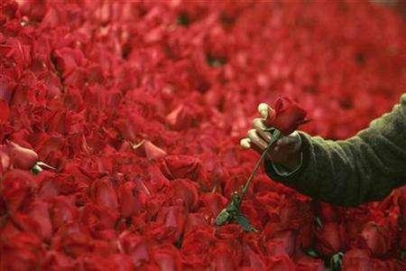 a rose photo reuters