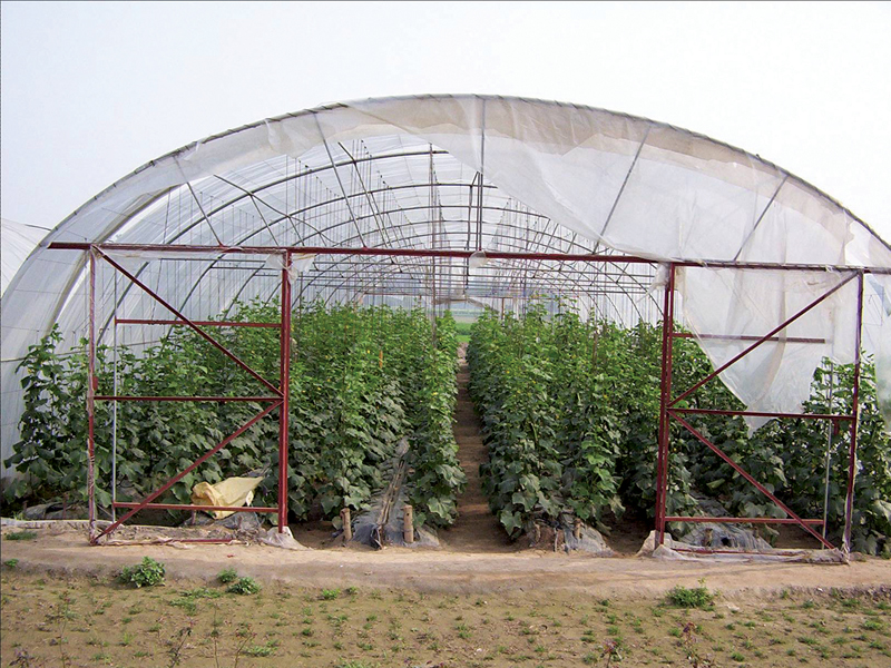 the per acre yield of vegetables cultivated in the tunnels was much higher than in traditional farming says farmers