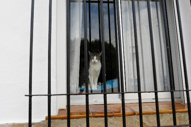 a cat looks out from a window during lockdown amid the coronavirus outbreak in ronda spain photo reuters file