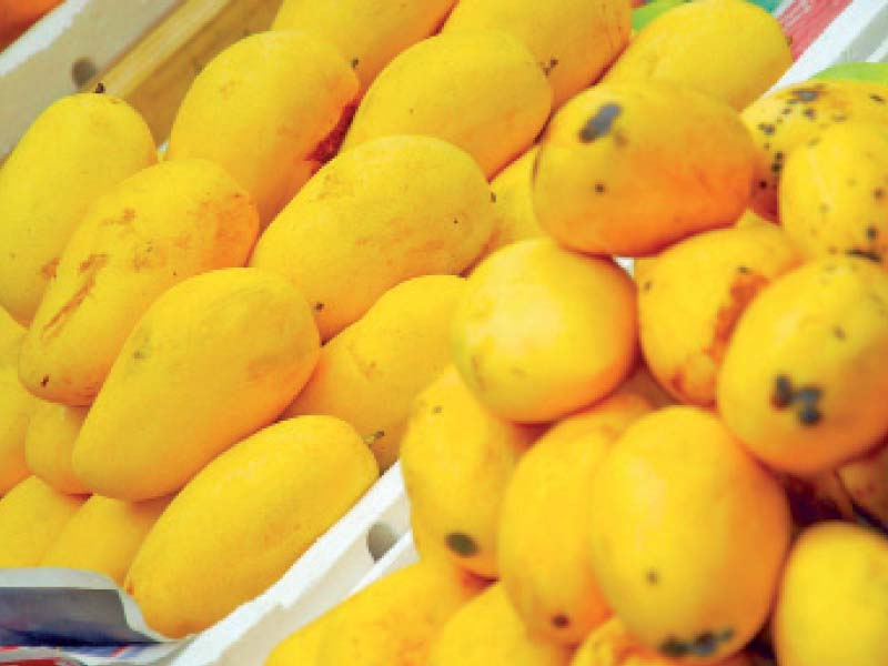 ahmed voiced fear that exporters were likely to experience difficulties in receiving fair prices of mango in the international market photo file
