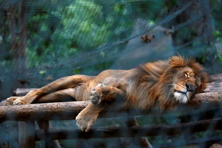 zoonotic tendency coronavirus threat worries karachi zoo